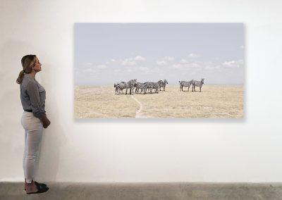 Zebra Plains, Maasai Mara, Kenya 48 x 85 installation