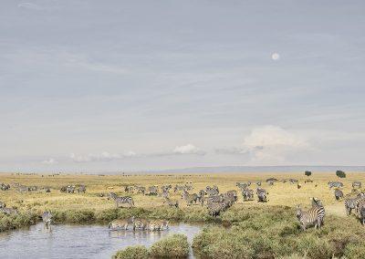 Zebras at Watering Hole, Maasai Mara, Kenya, 2019