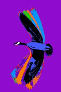 Flight (Canada Goose from Made in Canada part 2) 2019 (Purple)