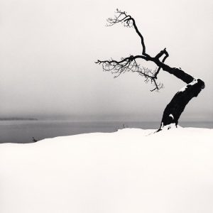 Kussharo Lake Tree, Study 5, Kotan, Hokkaido, Japan