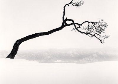 Kussharo Lake Tree, Study 9, Kotan, Hokkaido, Japan