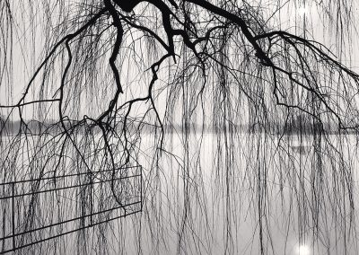 Lake Tree, Beihai Park, Beijing, China