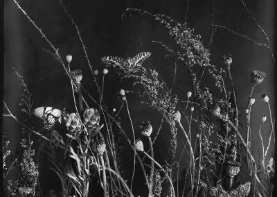 Underbrush #1, 2016