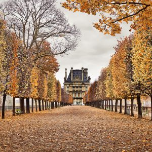 Red Leaves, Paris, FR, 2018