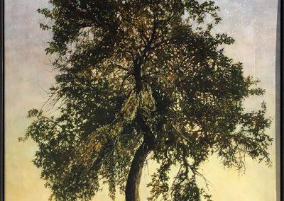 Peter's Tree